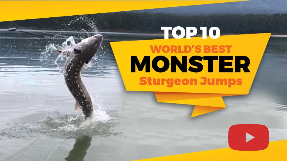 Top 10 World's Best MONSTER Sturgeon Jumps